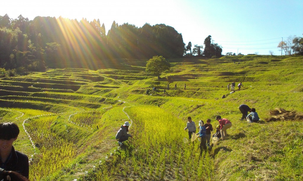School kids on a field trip explore the terraced rice fields in southern Chiba Prefecture. They cheerfully chatted with us and showed us all the critters they were finding in the wet grasses.