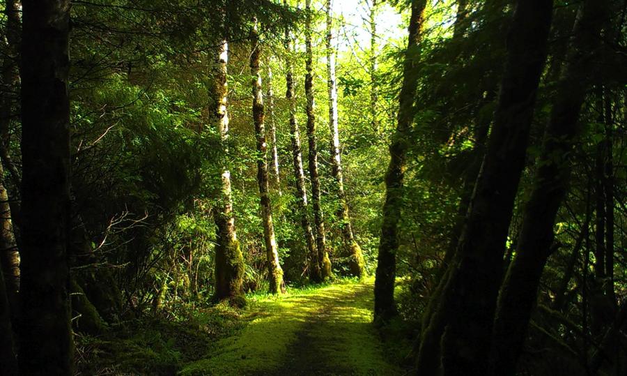 Haida Gwaii Golden Spruce Trail low res