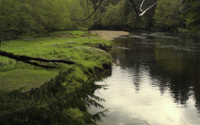 Haida Gwaii 4: The Yakoun River, The Pub, A Land of Giants